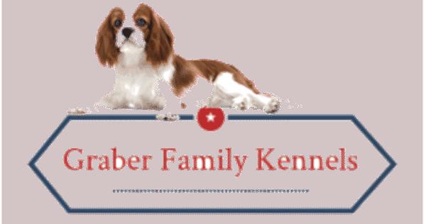 graber family kennels flutterworks website design